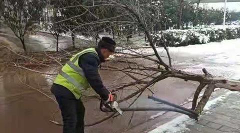 郑州城管绿化部门及时清理断枝保畅通
