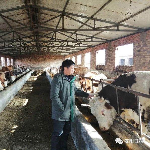 林州市董霸村:牛铃声声摇春光