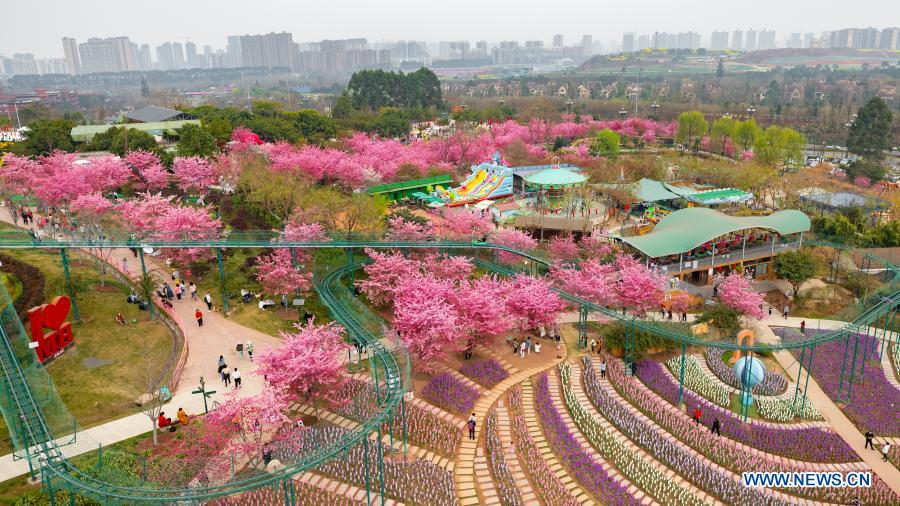 People enjoy their time in blossoms at a garden in Chengdu, southwest China's Sichuan Province, Feb. 22, 2021. (Photo by Wang Wei/Xinhua)