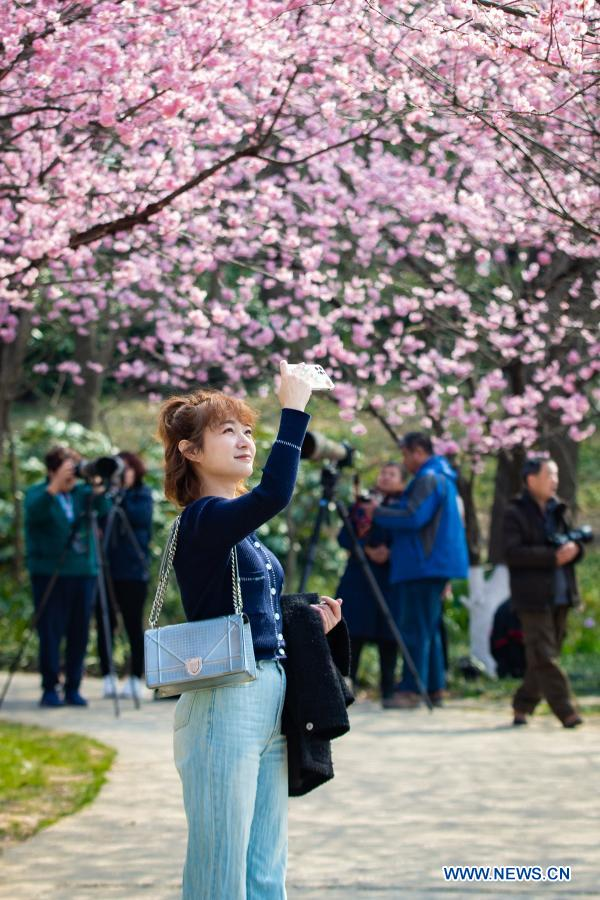 A woman takes photos of cherry blossoms at Nanjing Zhongshan Botanical Garden in Nanjing, east China's Jiangsu Province, Feb. 24, 2021. (Photo by Su Yang/Xinhua)