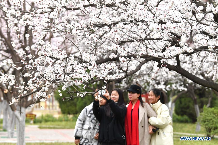 People take photos of blossoms at a park in Bozhou of east China's Anhui Province, Feb. 24, 2021. (Photo by Liu Qinli/Xinhua)
