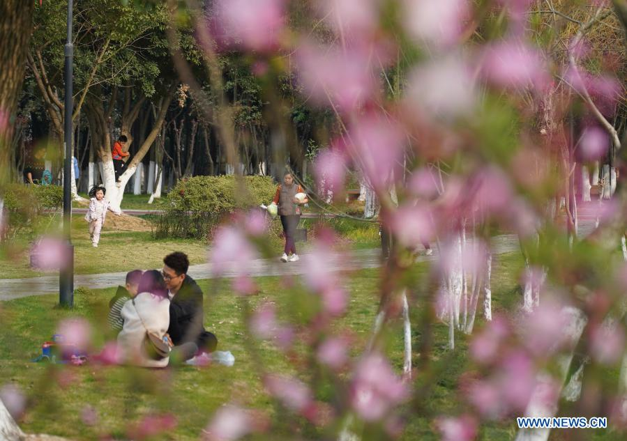 People enjoy their time in blossoms in High-tech District of Nanchang, east China's Jiangxi Province, Feb. 24, 2021. (Xinhua/Zhou Mi)