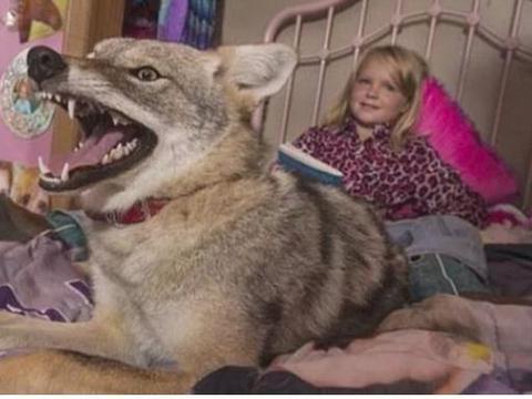 男子给女儿捡了一只流浪狗当宠物,多年后把他吓得不轻