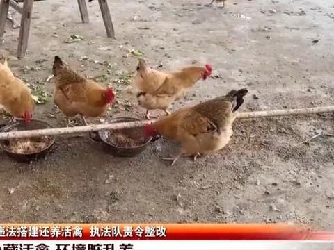 深圳业主在楼顶违建被查处,事后竟又开始养活禽,现场环境脏乱差