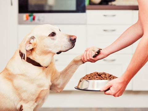 """这几种狗,堪称""""大胃王"""",肚子像黑洞一样超能吃"""