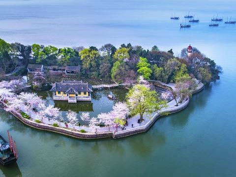 唯一能与日本媲美的赏樱地,就在无锡,坐拥国内最大樱花园