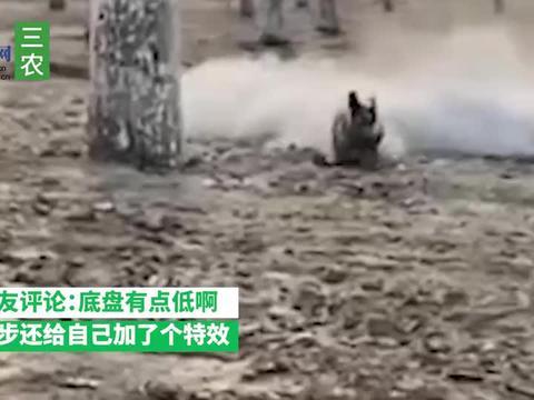 北京一小狗奔向主人跑出千军万马气势,阵阵扬尘拖尾 网友 底盘低
