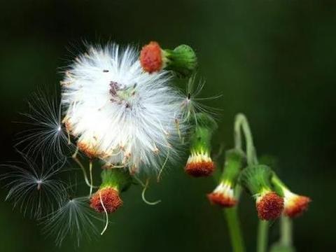 用这6个万用技巧,花卉拍摄不再难