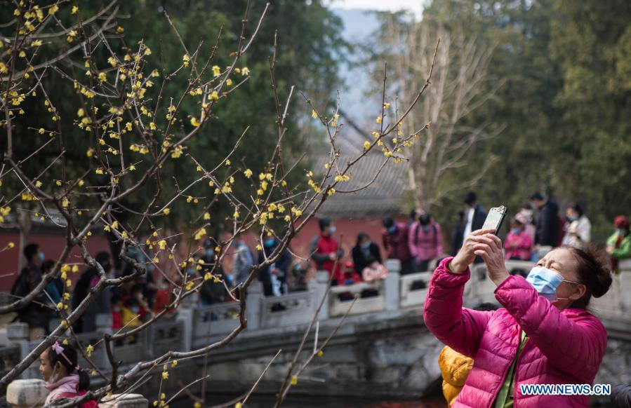 A visitor takes photos of wintersweet at Wofo Temple in Beijing, Capital of China, Feb. 27, 2021. (Xinhua/Li Jing)