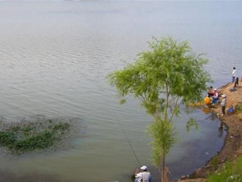 春季钓鱼,钓位的地形选择技巧,这些位置有鱼群,鱼比其他地方多