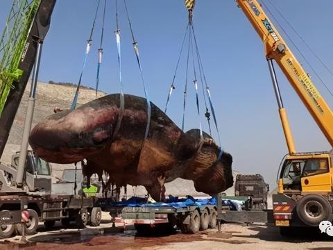 大连海域现一头18米长鲸鱼尸体,重约56吨,是一头搁浅抹香鲸