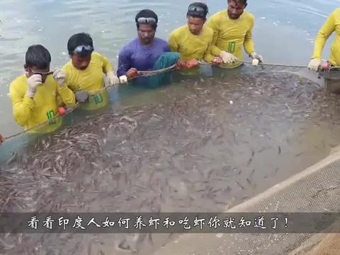 印度人养殖河虾,一年生产50万吨,难怪卖成了白菜价!