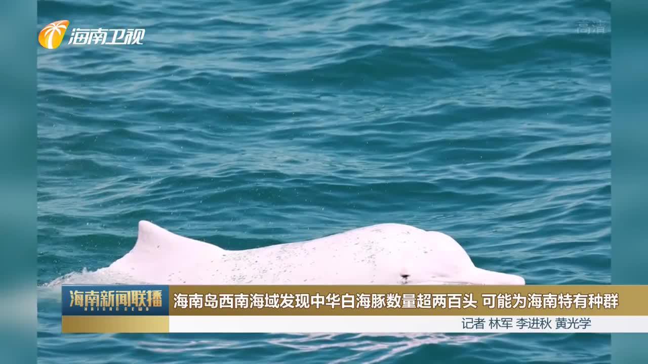 海南岛西南海域发现中华白海豚数量超两百头 可能为海南特有种群