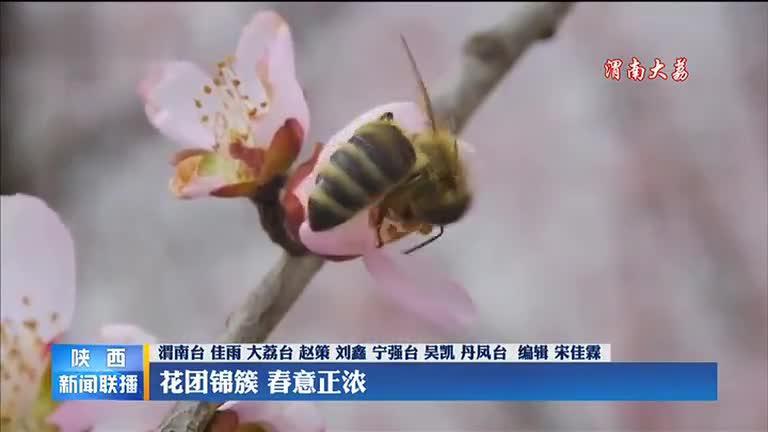 【春到家园】花团锦簇 春意正浓