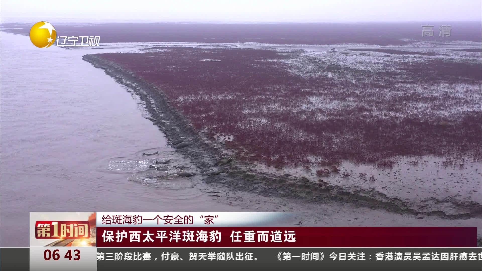 保护西太平洋斑海豹   任重而道远