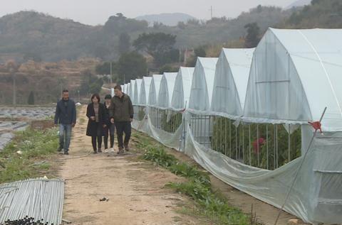 霞浦:农业科技特派员 助力乡村振兴