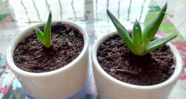植物换盆前该做好哪些准备,期间要注意什么,你知道吗?