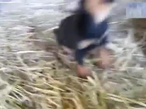 超凶的一只小奶狗,一碰就炸毛!