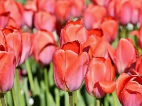 3月初,桃花旺盛,财运亨通,爱情事业双丰收的4大星座