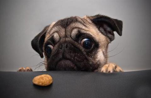 对奶酪片情有独钟的狗狗,当主人给它萝卜时,这反应萌翻了。。。