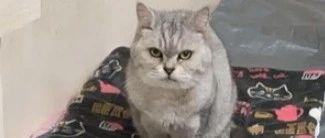 发年终奖给猫换次昂贵猫粮,结果猫吃了后,旧猫粮都不吃了!