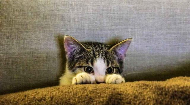 猫咪最讨厌的6种味道,一定注意别沾上了!