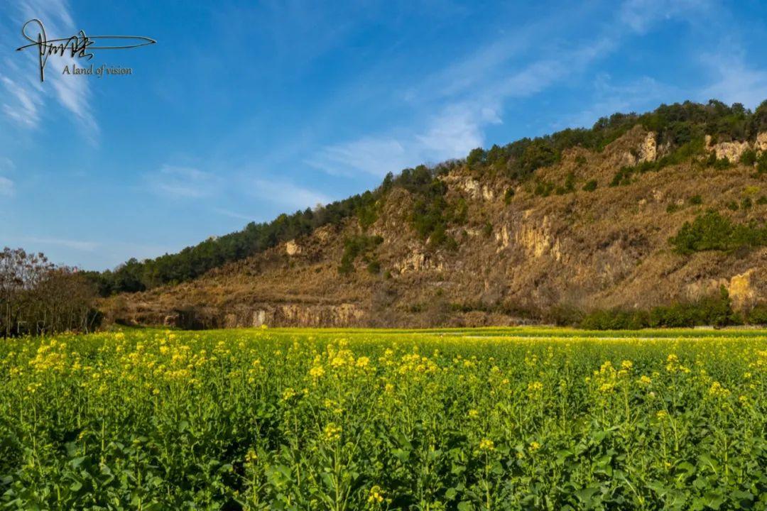这个废弃的矿坑,周围种满油菜花,摇身一变成为杭州踏青的好去处