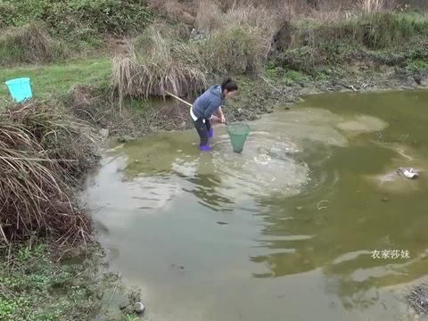 干旱太久山脚下的鱼塘水位下降,莎妹前去寻找漏网之鱼,有惊喜