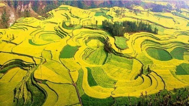 """云南坐拥百万亩的""""黄花海""""上线了,成为网红打卡地"""