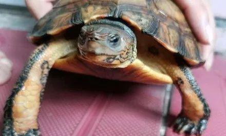 天气渐暖,你家龟龟准备出眠了吗?