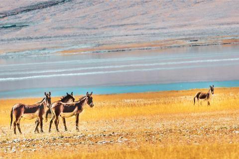 雅鲁藏布江的源头:一处未被打扰的秘境,多数人不知道它的存在