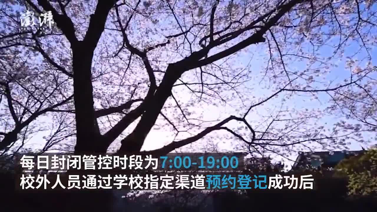 武大发布赏樱政策:社会公众需预约,设抗疫医护专场