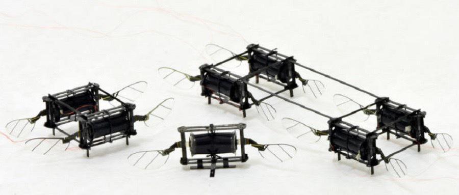 """麻省理工学院研发新型 """"昆虫""""无人机,长宽都仅有几厘米……"""