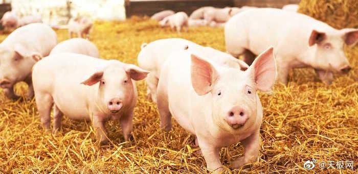 刘永好建议养猪行业实行准入机制:小户要鼓励,大户要规范