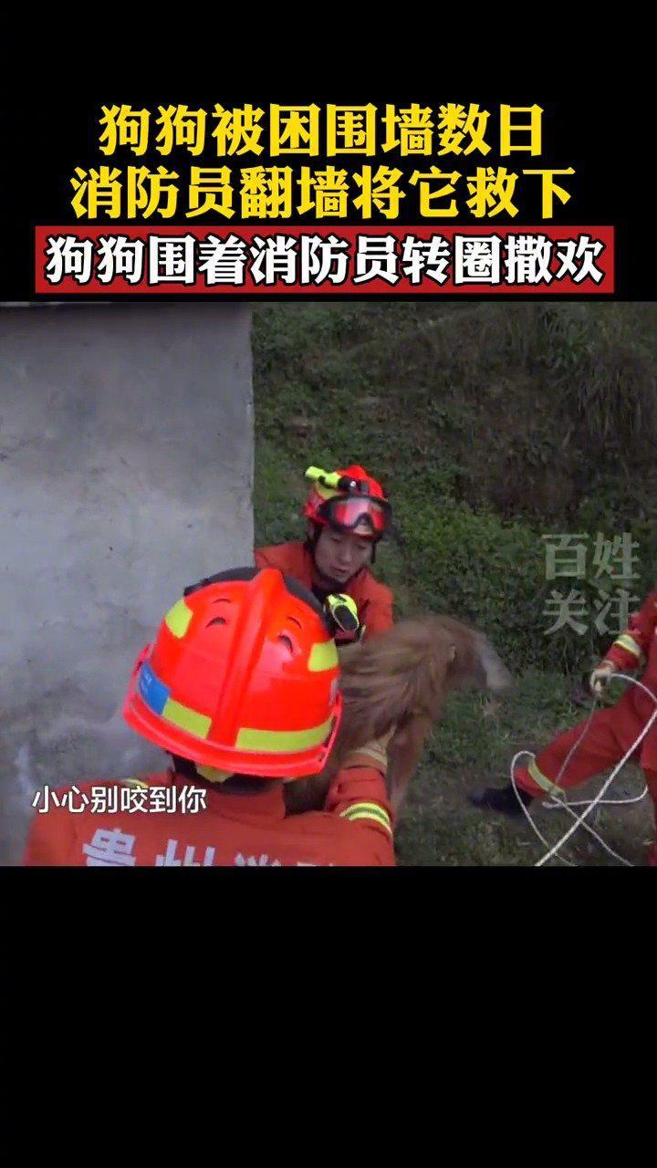 画面好有爱!狗狗被困围墙数日 消防员翻墙成功解救