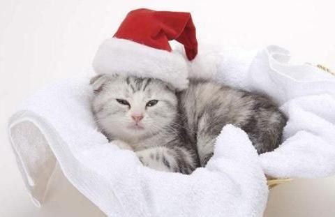 猫咪感冒口臭怎么办