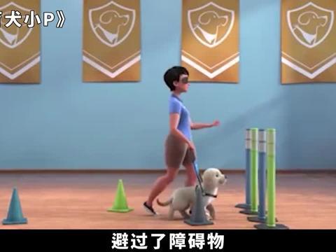 治愈暖心动画短片,狗狗为救盲人奋不顾身,梦想成真成为导盲犬