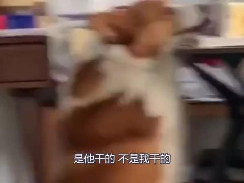 小狗狗能有什么坏心思呢 它只是想吃块蛋糕而已