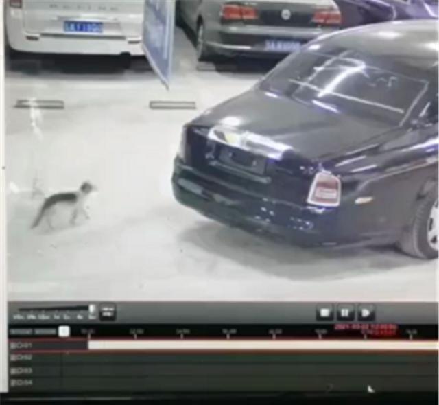 1100万劳斯莱斯车库违停,车顶出现划痕,一查监控却不是人为的