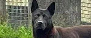 网友在路上偶遇一只黑狗,走近一看它的身材,瞬间笑喷了!