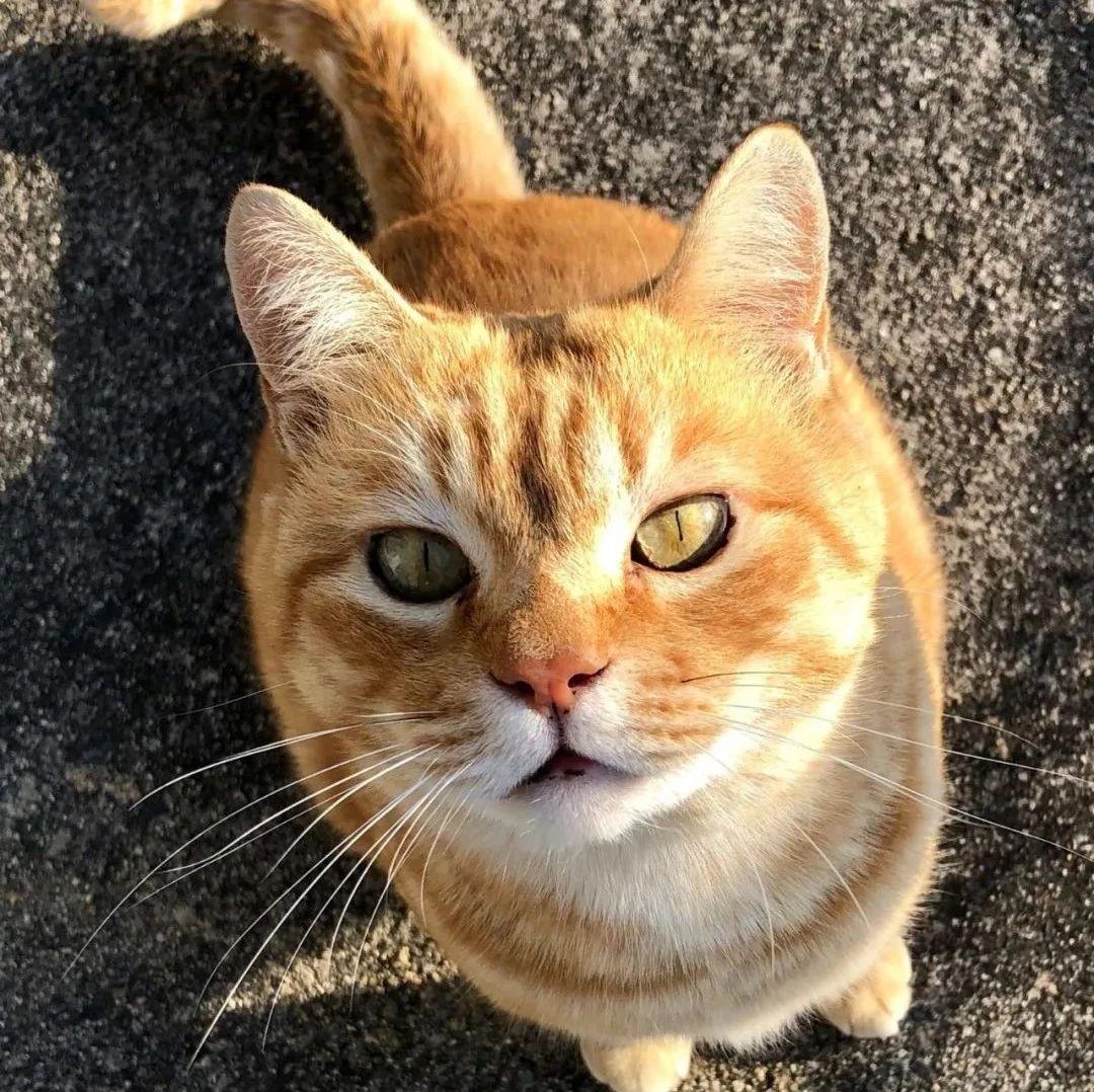 硬闯4年美术馆的日本小猫咪终于进去了!?门卫大叔不屑一笑:就这?
