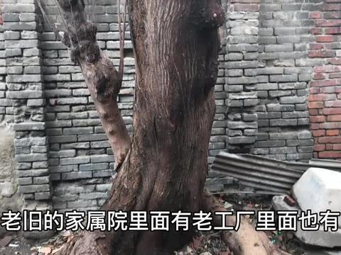 郑州老旧小区里的房子,河南省教育厅印刷厂,厂房有50年历史吗?