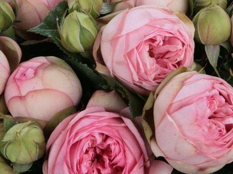 漂亮美艳的3种花,好看又好养,花量巨大,能给一片花海