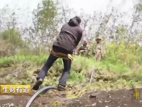 栽种铁皮石斛竟要在悬崖上,种植户们飞檐走壁十分危险丨生财有道