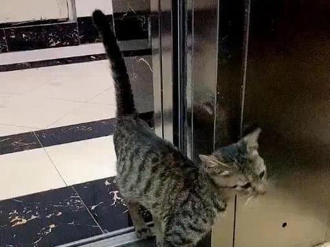一门之隔看出俩猫的差距,自家猫挑食偏食,门外流浪猫皮包骨头
