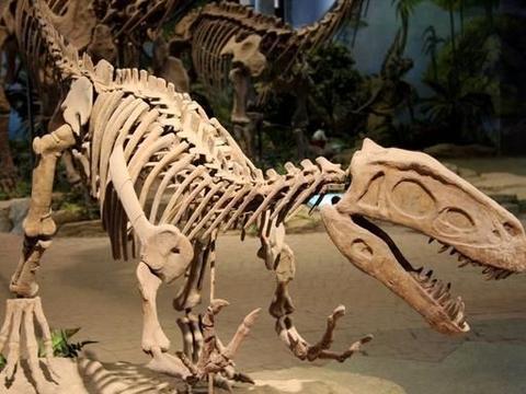 """中国的""""侏罗纪公园"""":四川自贡恐龙博物馆"""