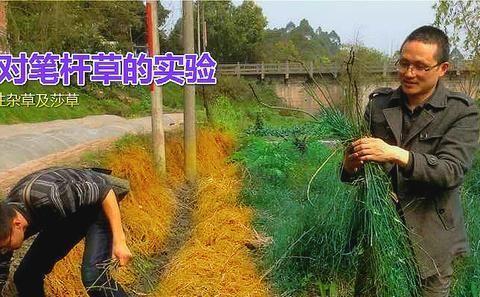 针对柑橘园恶性杂草——除草更除根,同时还松土