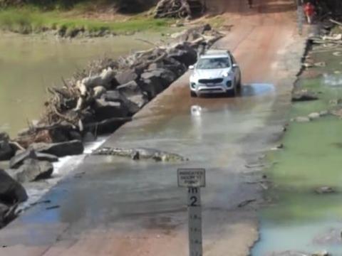 男子开车外出游玩,路过水桥时被冷血动物拦住,吓得只能躲在车里