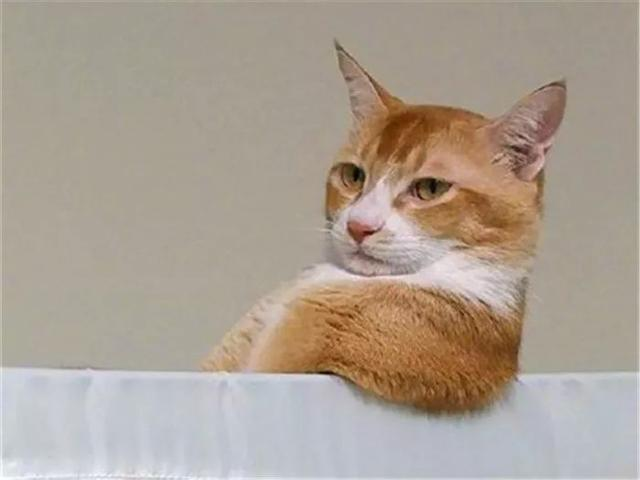 橘猫被收养后意外怀孕,主人豪气喂养10只大橘,网友:富贵人家