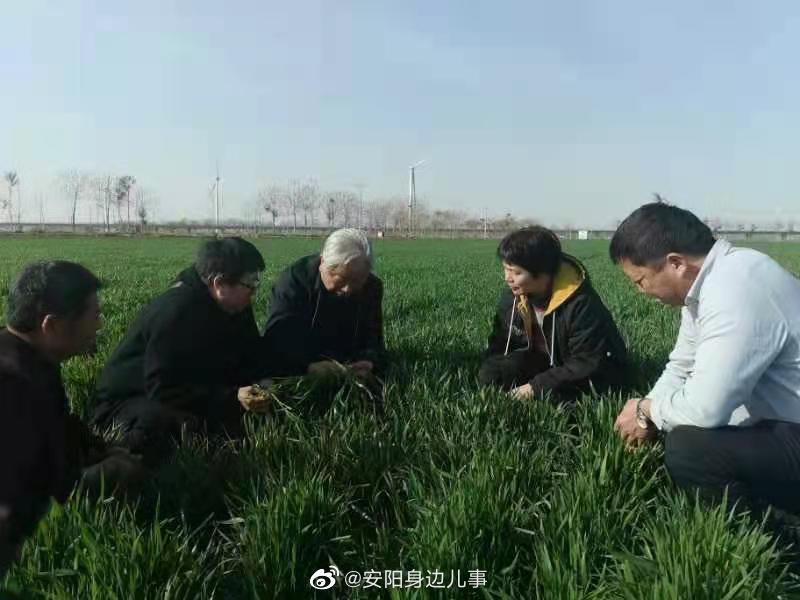 河南滑县:小麦进入拔节期 专家指导到田地